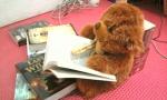 Granger lagi duduk baca novel